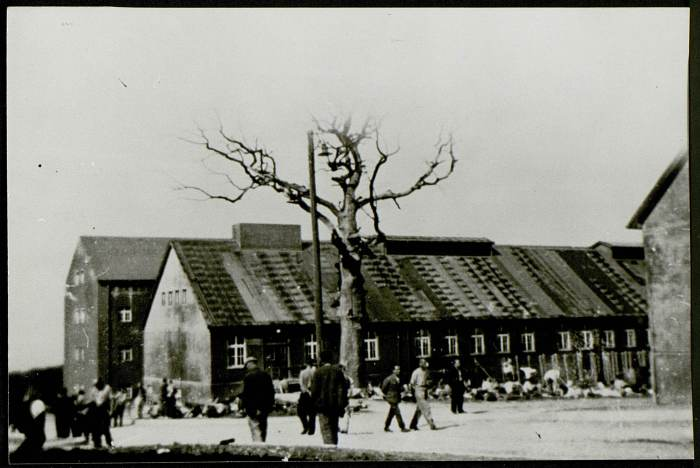 •Photographie de l'arbre de Goethe avec des déportés se promenant (certainement prise par Angeli, un dimanche) © AFBDK